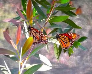 Butterfly Pavilion 2