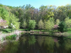 The pond last spring.