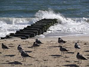 Rehoboth Beach, DE photo by Lucinda Marshall